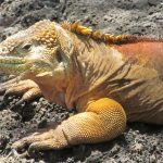 Budget Tips for a Trip to the Galapagos Islands Using Miles & Points